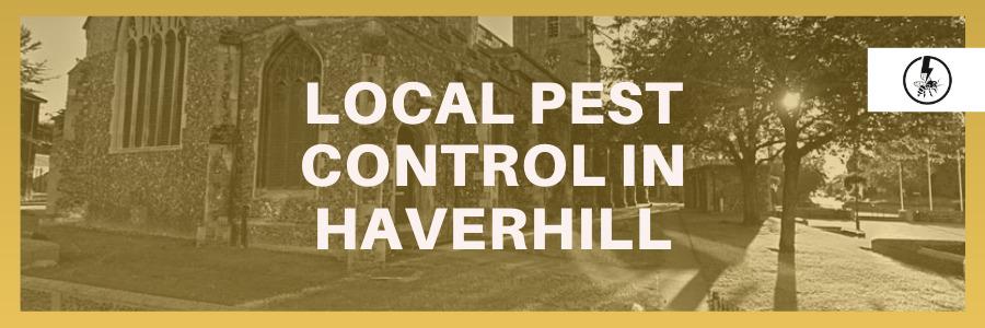 Local Pest Control in Haverhill