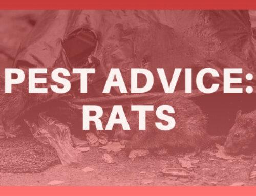 Pest Advice: Rats