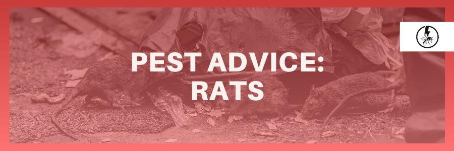 Pest advice rats