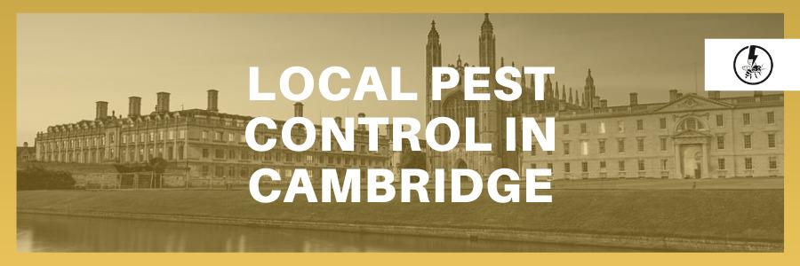 Local Pest control in Cambridge