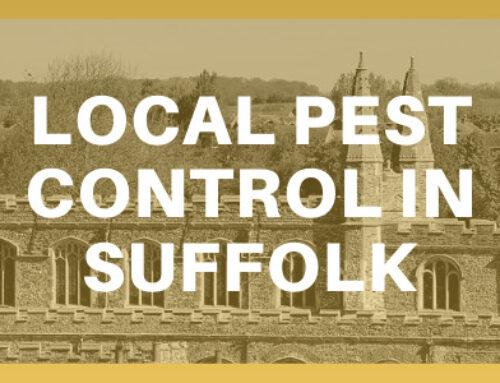 Local Pest control in Suffolk