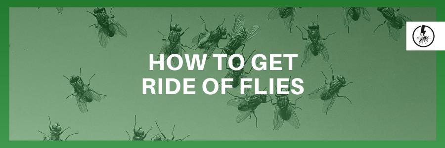 How to get ride of flies